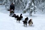 20-22 января 2017 года гонки на собачьих упряжках «По земле Сампо» в Петрозаводске