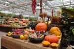 Pogostite.ru - Челябинская ярмарка. Осенний сад 2018 – масштабная выставка потребительской продукции