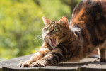5 звезд для кошек: новый отель для домашних питомцев открылся в Турции