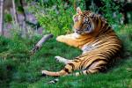 Зоопарк наоборот: интересное место в Новой Зеландии, где посетители становятся «экспонатами»