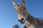 Pogostite.ru - Путешествовать стало еще интереснее: в Черногории открыли музей ослов