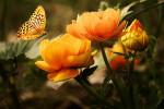 Высавка FlowersExpo 2019 – взрыв красок и ароматов произойдет 10-12 сентября в МВЦ «Крокус Экспо»