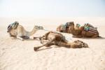 Тунис и Таиланд сократили карантин для туристов
