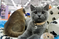 Pogostite.ru - Выставка кошек 2016 в