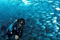 Pogostite.ru - Логово омаров в Сокольниках — Малайзия приглашает