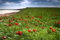 Pogostite.ru - Калмыкия создаёт «тюльпановый» маршрут