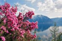 Pogostite.ru - Алтай откроет летний сезон «Цветением маральника»