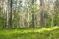Pogostite.ru - «Брянский лес» стал доступен с воздуха