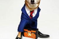 Pogostite.ru - «Аэрофлот» повысил собачьи цены
