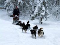 Pogostite.ru - 20-22 января 2017 года гонки на собачьих упряжках «По земле Сампо» в Петрозаводске