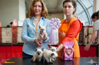 Pogostite.ru - Выставка кошек -