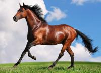 Pogostite.ru - Эквирос-Professional 2018 – событие мирового масштаба в мире коневодства