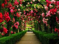 Pogostite.ru - Обнови свой сад 2018 – выставка для истинных поклонников садоводства