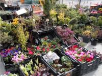 Pogostite.ru - Межрегиональная выставка-ярмарка «Весенний сад» пройдет в ВО «Пермская ярмарка» с 23 по 28 апреля (г. Пермь, Россия)