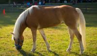 Pogostite.ru - Эквирос-Professional 2019  - выставка для поклонников лошадей и верховой езды состоится 28-31 марта в КВЦ «Сокольники»