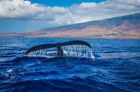 Pogostite.ru - В Шотландии можно наблюдать за китами по специально созданному маршруту