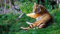 Pogostite.ru - Зоопарк наоборот: интересное место в Новой Зеландии, где посетители становятся «экспонатами»