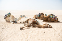 Pogostite.ru - Тунис и Таиланд сократили карантин для туристов