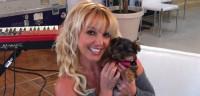 Pogostite.ru - Бритни Спирс покупает бриллианты своим собакам