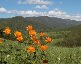 Золото Алтая | озеро | коттеджи | эко-туризм