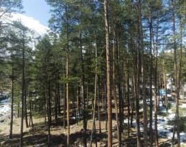 Сосновый Бор | Терскол | гора Чегет | Сауна |