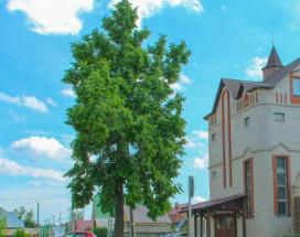 Градец | Чайковский | Музей крестьянская усадьба | Сауна
