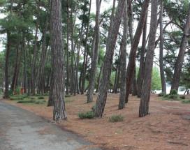 ВИКТОРИЯ | Пицунда | 200 м от пляжа