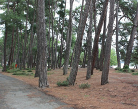 ВИКТОРИЯ | Пицундра | 200 м от пляжа