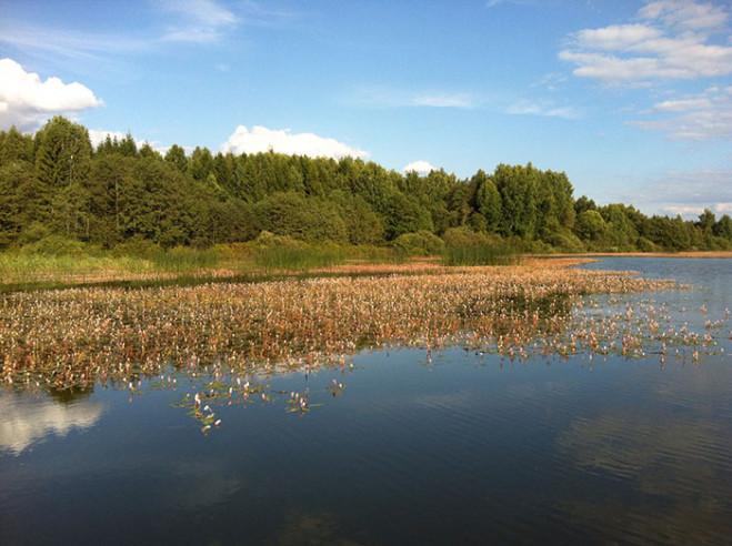 Pogostite.ru - ФЛАГМАН | Рузский р-н | Озернинское водохранилище | пляж #21