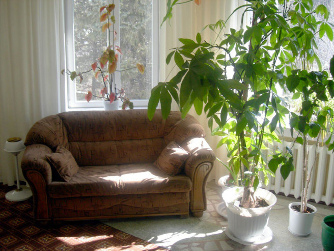 Pogostite.ru - Чуринъ (г. Благовещенск, центр) #12