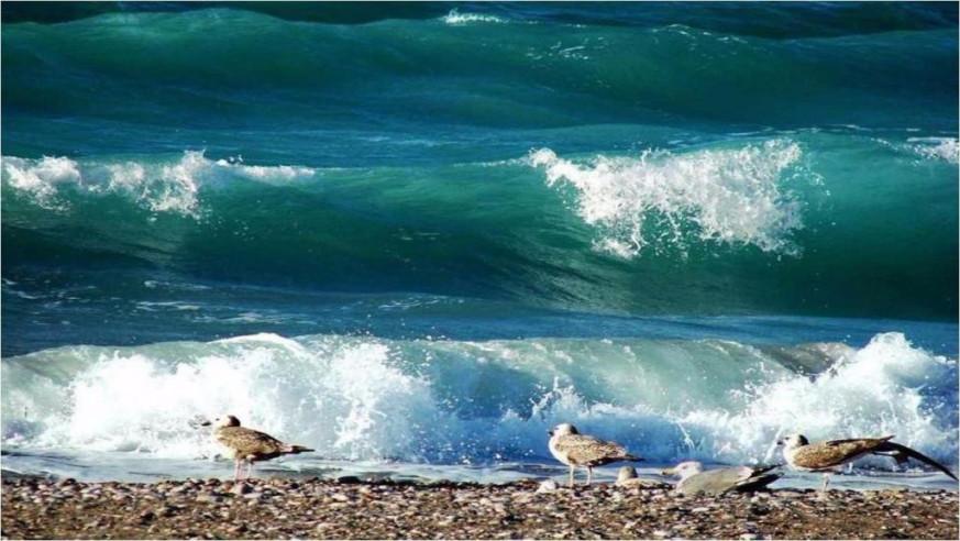 Pogostite.ru - ДОЛЬЧЕ ВИТА - DOLCHE VITA | п. Лоо | 1 линия | песчаный пляж #18