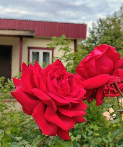 Pogostite.ru - Парк Отель КАНТРИ (Финский залив) #9