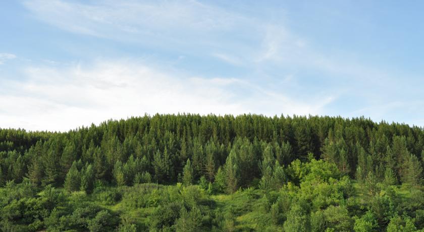 Pogostite.ru - Яблоневый цвет | подъемник Катунь 1 | красивый вид | ирландский завтрак #2