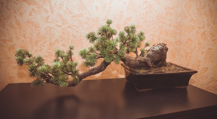 Pogostite.ru - Конакоф Парк Отель | Сажино | Сауна | Бильярд | #6