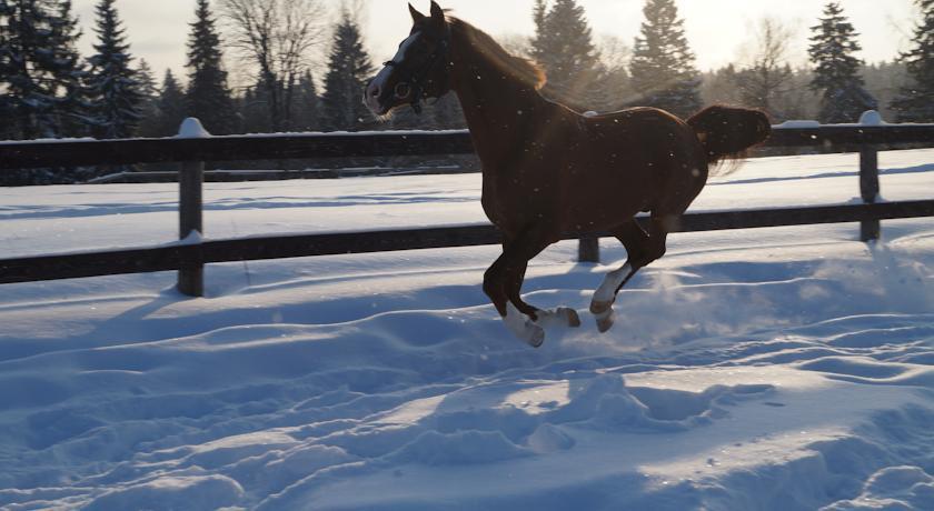 Pogostite.ru - УСАДЬБА КУЗНЕЦОВО ЭКО-ФЕРМА | МО, д. Кузнецово | СПА-процедуры | Прокат верблюда | Верховая езда #45
