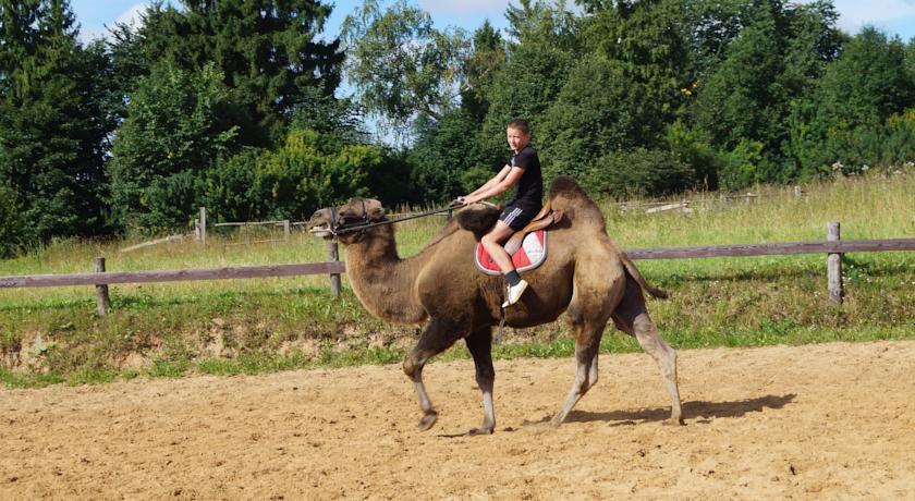 Pogostite.ru - УСАДЬБА КУЗНЕЦОВО ЭКО-ФЕРМА | МО, д. Кузнецово | СПА-процедуры | Прокат верблюда | Верховая езда #1