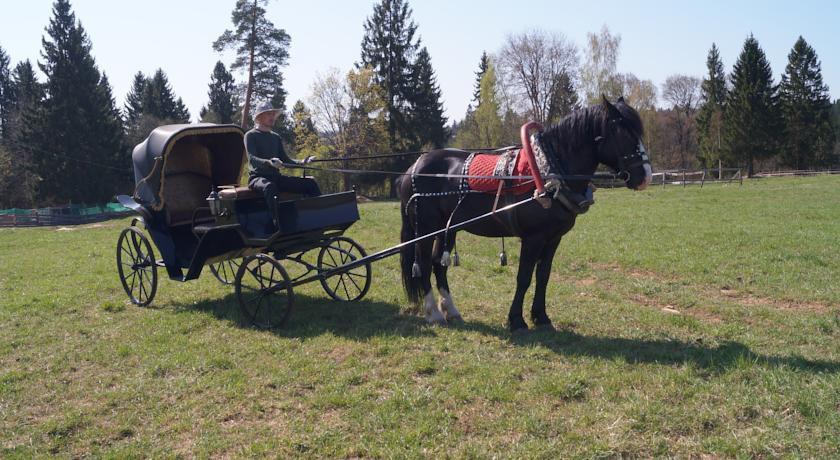 Pogostite.ru - УСАДЬБА КУЗНЕЦОВО ЭКО-ФЕРМА | МО, д. Кузнецово | СПА-процедуры | Прокат верблюда | Верховая езда #34