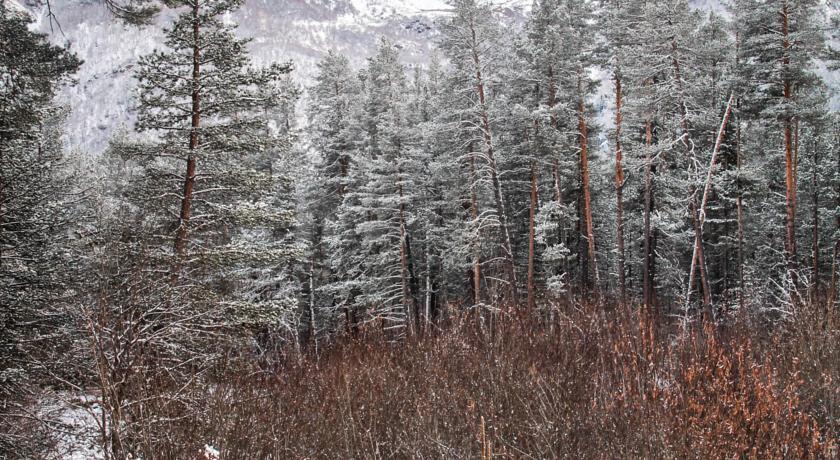 Pogostite.ru - Сосновый Бор   Терскол   гора Чегет   Сауна   #5