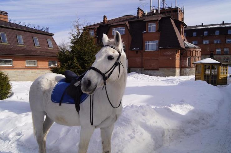 Pogostite.ru - К-Визит | м. Озерки | Парковка #4