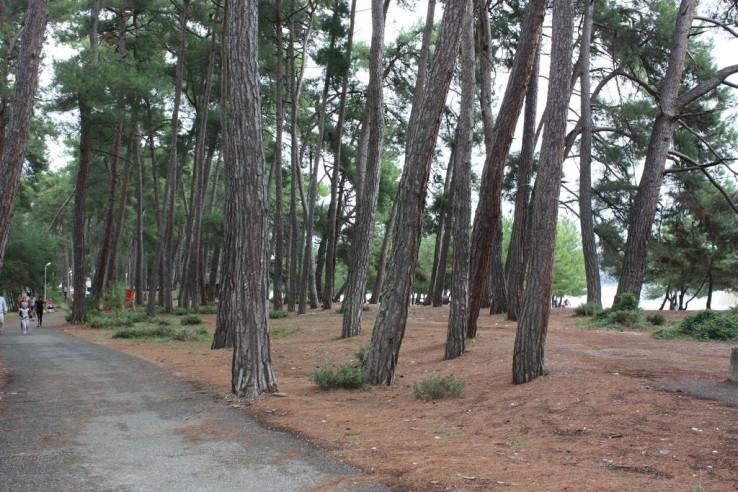 Pogostite.ru - ВИКТОРИЯ | Пицунда | 200 м от пляжа #5
