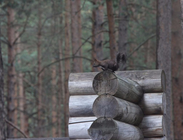 Pogostite.ru - Марал | Горнолыжный курорт Приэльбрусье | г. Эльбрус | Парковка #11